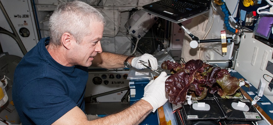 Veggie Experiment Harvest on International Space Station (ISS)